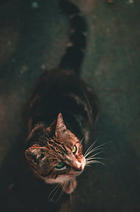 cat, kitten, animal, pet, blur, outside, domestic Cat