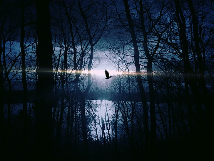 ptica, letjeti, gespentisch, noć, čudno, noćno nebo, jezero