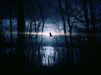 bird, lake, moonlight, night, silhouette, sky, trees