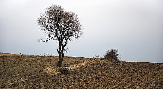 tree, landscape, nature, poland, view, poland village, fields