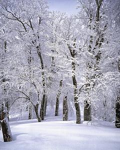 paisagem, Japão, Shirakami-sanchi, floresta de faias, cena de neve, branco puro, MT shirakami