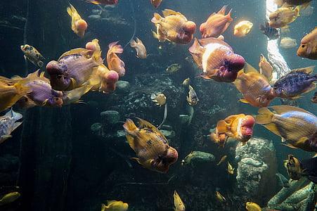 peix, Aquari, l'aigua, nedar, Aquari de mar, món submarí, colors