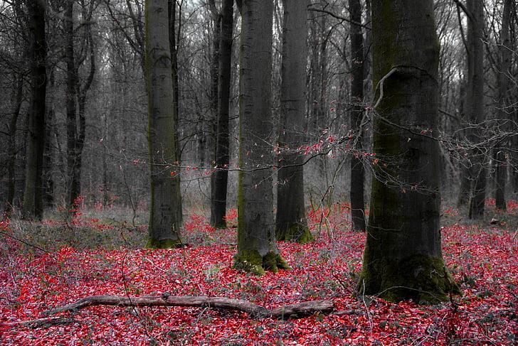skog, trær, rare, landskapet, eventyr skog