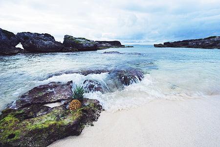 platja, Costa, illa, oceà, pinya, roques, sorra