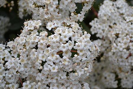 weiße Blume, Blume, Blumen, Frühling, Flora