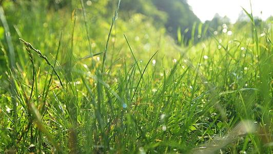 tráva, lúka, lúka trávy, Príroda, steblo trávy, Zelená, steblá trávy