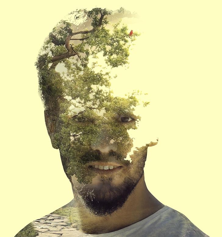 dvojitej expozície, Photoshop, vrstva, strom, Príroda, expozícia
