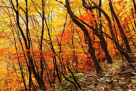 autumn, landscape, autumn leaves, forest, rural landscape, red maple leaf, nature