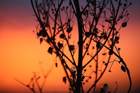 pôr do sol, céu da noite, arrebol, céu, abendstimmung, pôr do sol, Artemísia