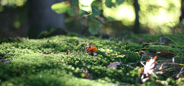 forest floor, leaf, moss, green, leaves, forest, ground