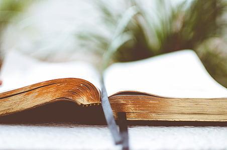 raamat, lehekülg, must, järjehoidja, lugemine, No inimesed, Suurendus: