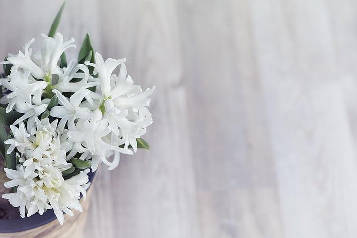 gėlė, balta, gėlės, kvepiančių gėlių, augalų, Pavasario gėlė, hiacintas