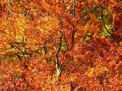 marró, arbre, branca, bosc, tardor, colors, arbres