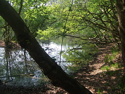 water, trees, light, atmosphere, mirroring, nature, forest