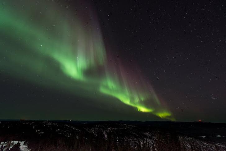Aurora, aurora borealis, nat, nordlys, Sky, stjerner, træer