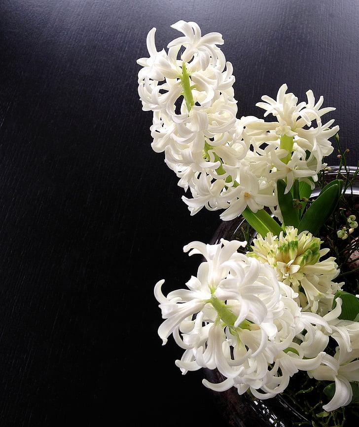 hyasintti, hyasintit, jousitettu hyasintti, valkoinen, kevään, tuoksu, kukat