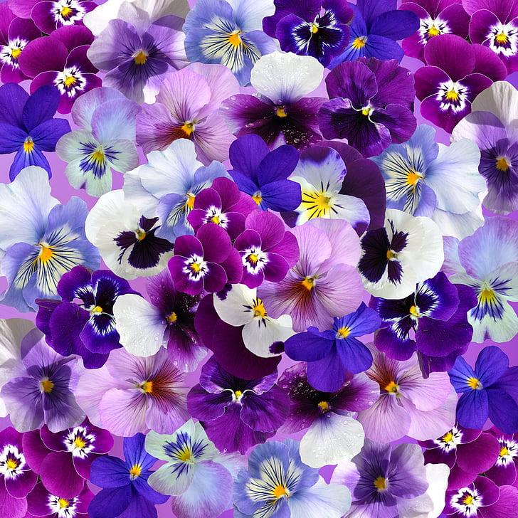 gràfic, fons, pensament, Setmana Santa, primavera, flors, colors
