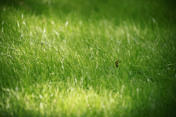trava, ljeto, krupne, zelena trava