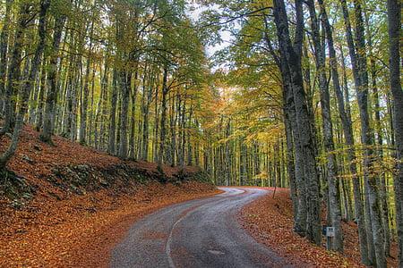 bosc, natura, bosc tardor, arbre, fullatge, fulles seques, arbres