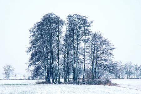 impressões de inverno, invernal, neve, frio, Inverno, magia do inverno, Nevado