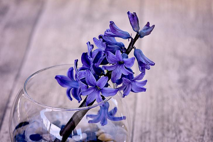 eceng gondok, biru, blueme, bunga, biru bunga, wangi bunga, wangi