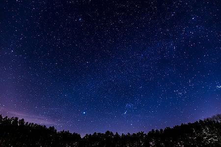 estrellat, nit, bosc, cel, estrella, cel de nit, estrella - espai