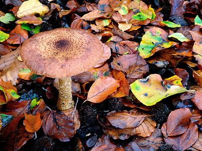 Гриб, Осень, лес, листья, Природа, herbstimpression, Влажные