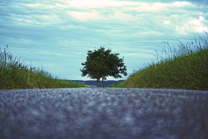 arbre, route, nature, suite, asphalte, paysage, sans fin