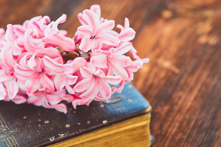 Jacint, llibre, flor, flors, Rosa, llibre antic, utilitzat