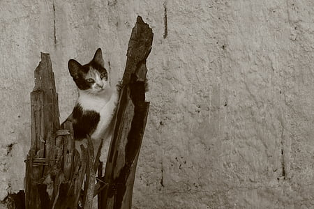cat, claw, feline