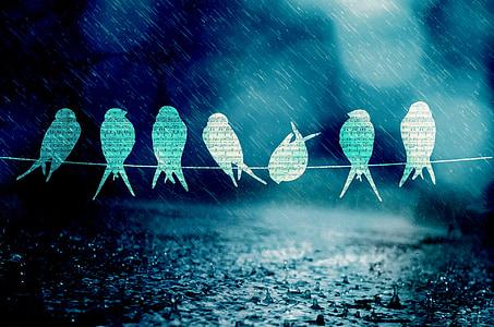 птици, песен, музика, дъжд, синьо, светлина
