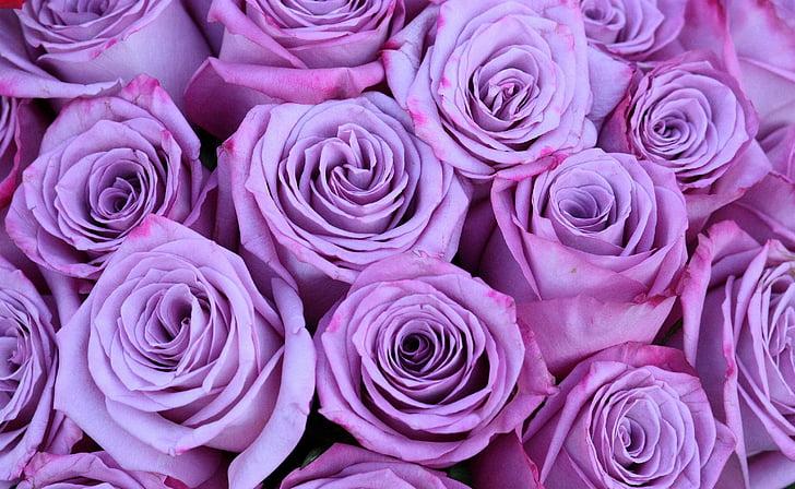 Roses, RAM, mov, flors, Rosa - flor, natura, flor