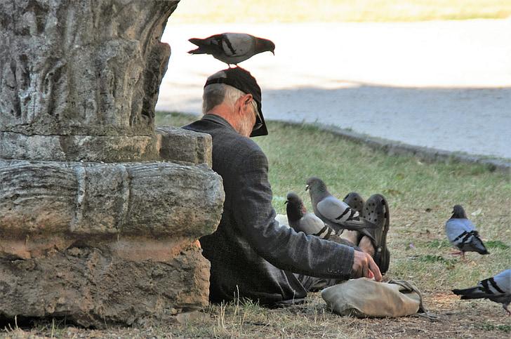 pigeons, aliments pour animaux, oiseaux, alimentaire, plume, manger, pigeons de ville