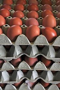 ou, ous de gallina, ou de gallina, Nutrició, aliments, ouera, per descomptat