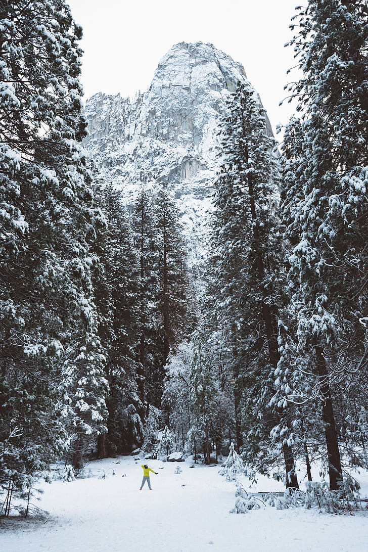 winter, snow, cold, weather, trees, forest, woods