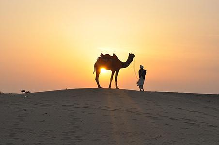 desert de, posta de sol, camell, sorra, silueta, dunes de sorra, natura