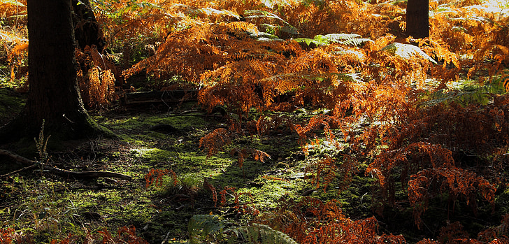 forest, forest floor, fern, moss, nature, landscape, autumn