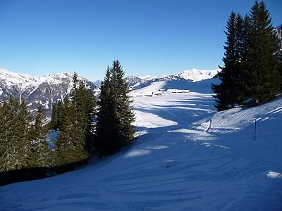 Zimní, sníh, Zimní, zimní les, zasněžené