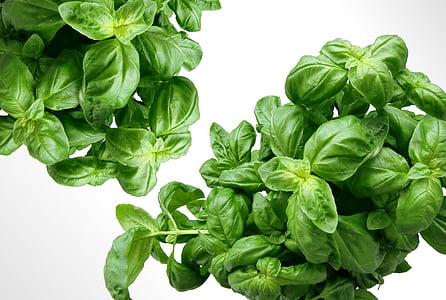 verd, alfàbrega, herbes, Mediterrània, fulles, planta, color verd