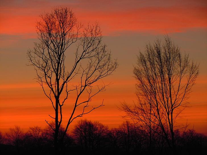 árboles, cielo, morgenrot, silueta