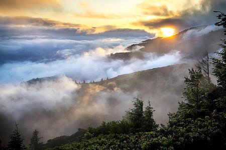 fjell, landskapet, tåke, røyk, skog, trær, miljø