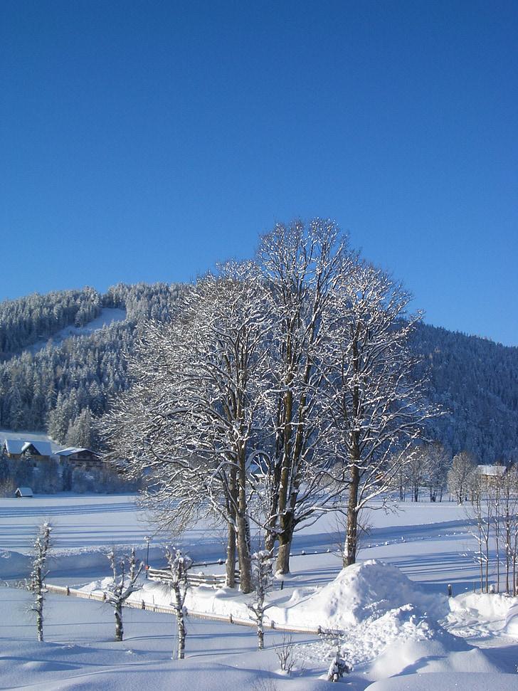 зимни, дърво, снежна, дървета, сняг, зимни, Зимно настроение