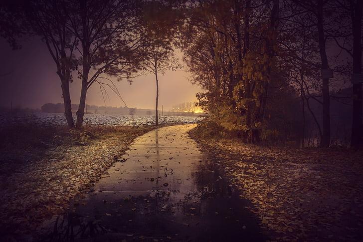 jesień, drogi, drzewa, lasu, pozostawia, asfaltu, Avenue