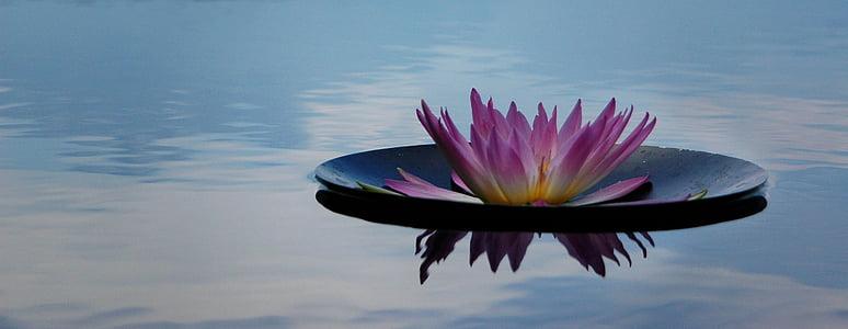 sérénité, nature, fleur, Zen, calme, tranquil, méditation