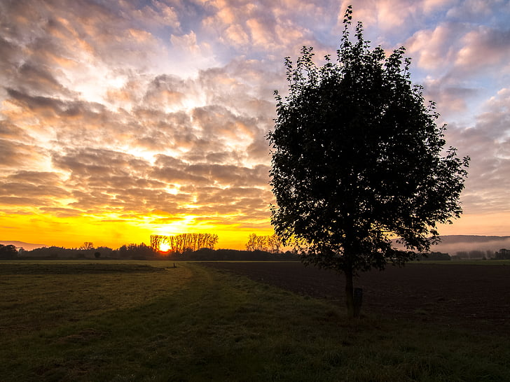landskap, soluppgång, träd, naturen, solnedgång, solen, Sky