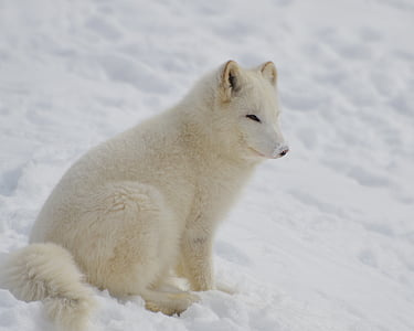 animal, cold, cute, frost, frosty, frozen, fur