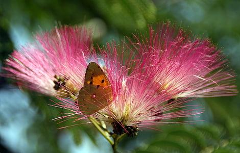 пеперуда, жълто, цвете, оцветяване, природата, насекоми, пеперуда - насекоми