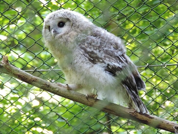Pöllö, Huuhkaja, metsän eläinten, Tunturipöllö, Zoo, eläinten tallennus, vauvan eläin