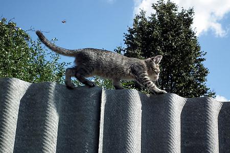 kitten, fence, cat, pet, little, striped, animals