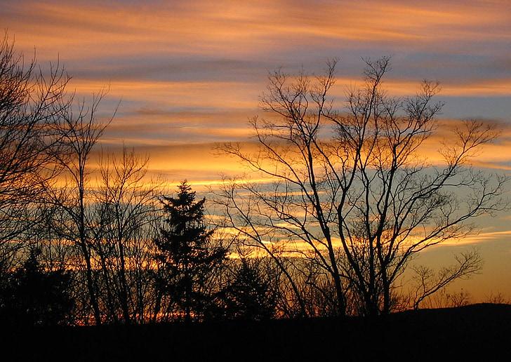 posta de sol, l'hivern, l'aire lliure, paisatge, arbre, bosc, fons posta de sol